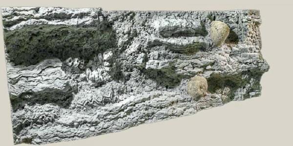 Back to Nature Reef Rückwand 120 x 50cm