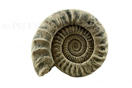 Back to Nature Ammonite Module