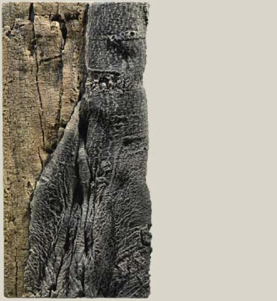 Back to Nature Slimline 50C Back to Nature Amazonas Rückwand 20 x 45cm