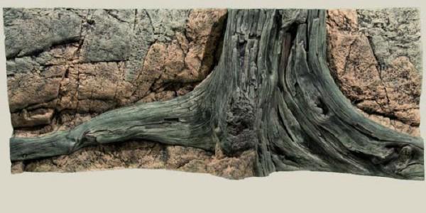Back to Nature Amazonas Rückwand 120 x50cm