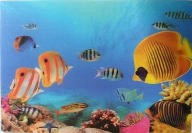 3D Postkarte Meerwasserfische - 16cm