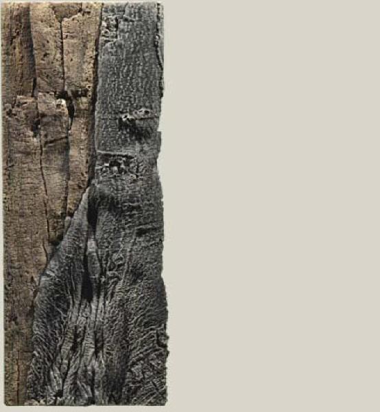 Back to Nature Slimline 60C Back to Nature Amazonas Rückwand 20 x 55cm