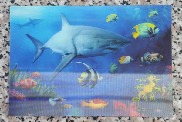 3D Postkarte Haie - 16cm