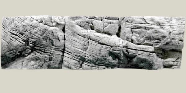 Back to Nature Tanganyika  Rückwand 200 x 60cm