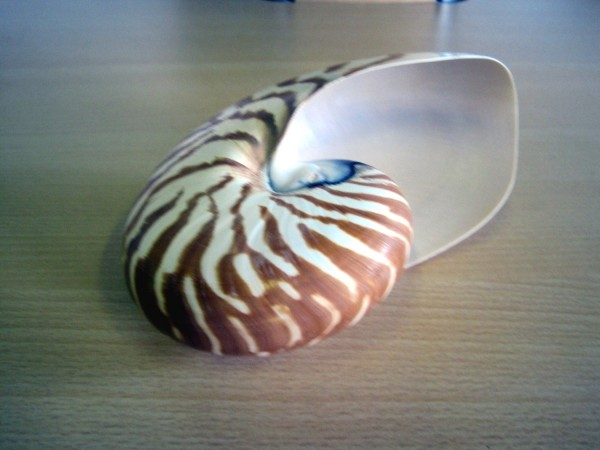 Nautilus Gehäuse